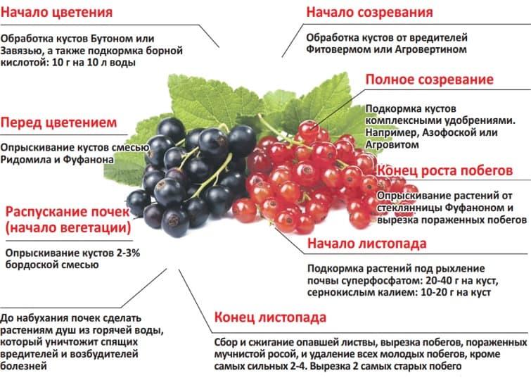 Как хранить листья смородины на зиму для чая: правила и способы заготовки