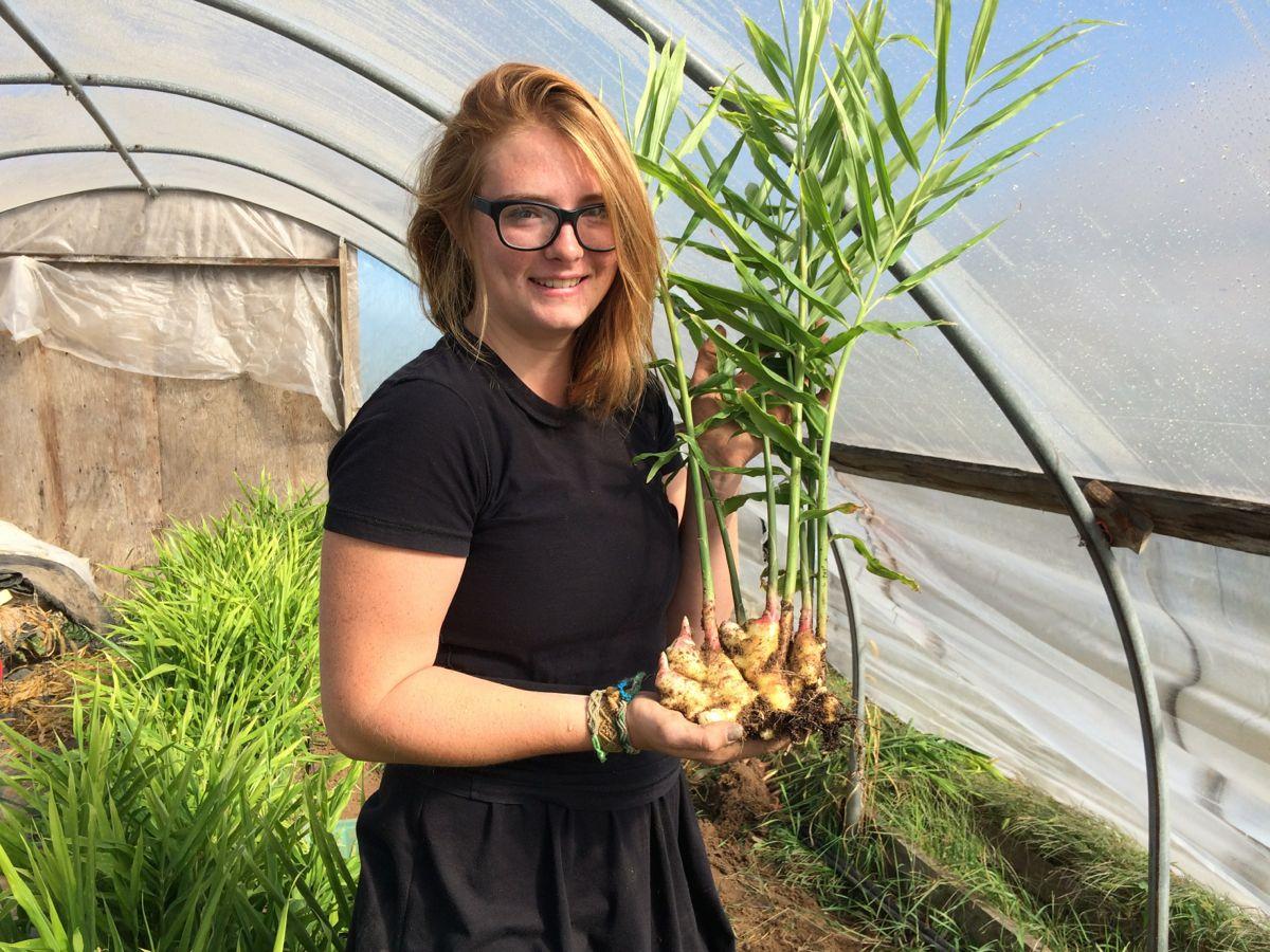 Как выращивать имбирь на даче в открытом грунте