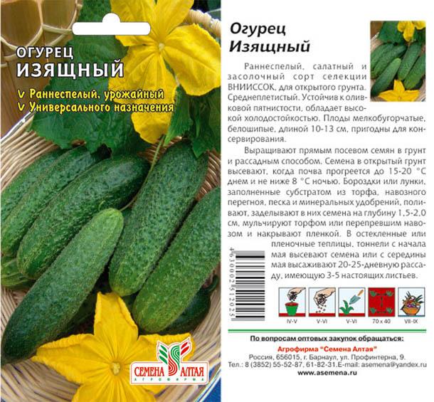 Огурцы изящный: описание сорта, сколько дают урожая, выращивание, фото