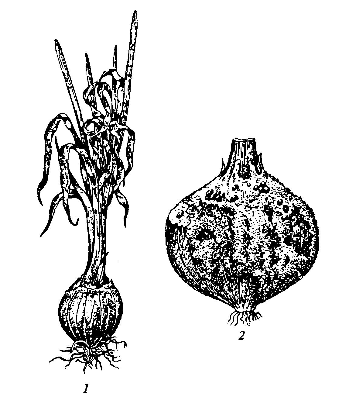 Лечение облысения народными средствами: масла, мази, травы