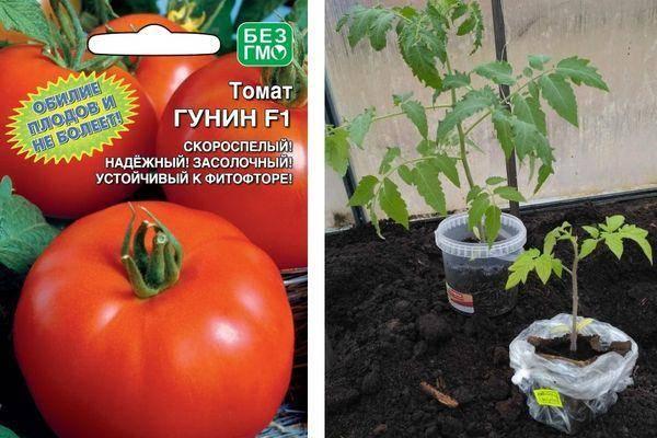 Характеристика томата Гунин и описание свойств сорта