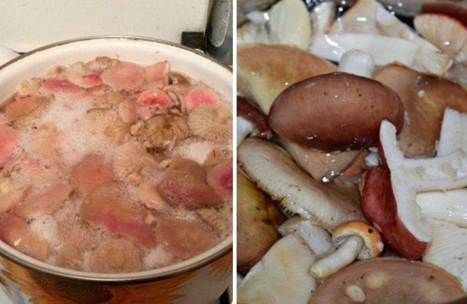 Сыроежки на зиму горячим способом. рецепт приготовления маринованных сыроежек на зиму в банках