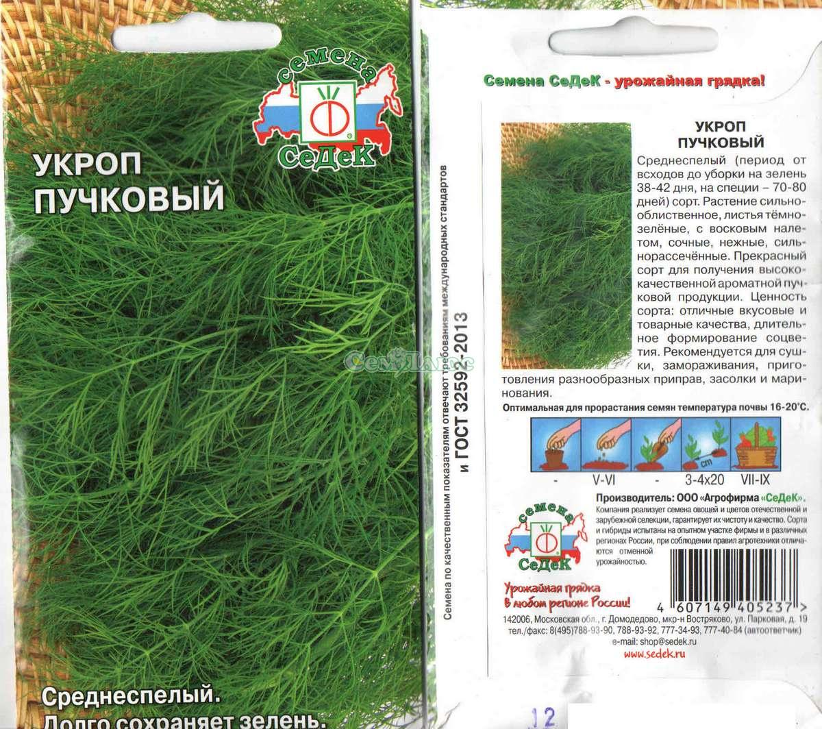 Укроп: посадка и уход в открытом грунте, как вырастить в домашних условиях, фото