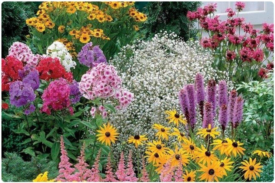 Многолетние цветы для сибири и урала - какие лучше