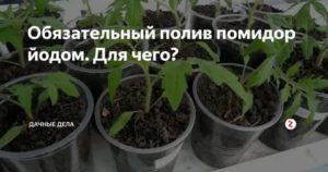 Как проводится подкормка рассады помидоров после пикировки: когда и чем можно подкормить томаты, видео о процедуре