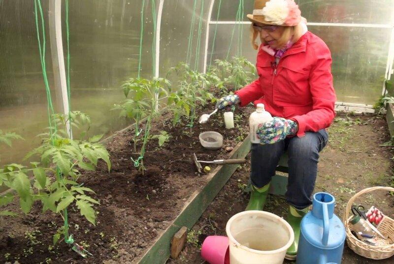Выращивание перцев в теплице из поликарбоната от а до я в подмосковье, сибири, ленинградской области, на урале