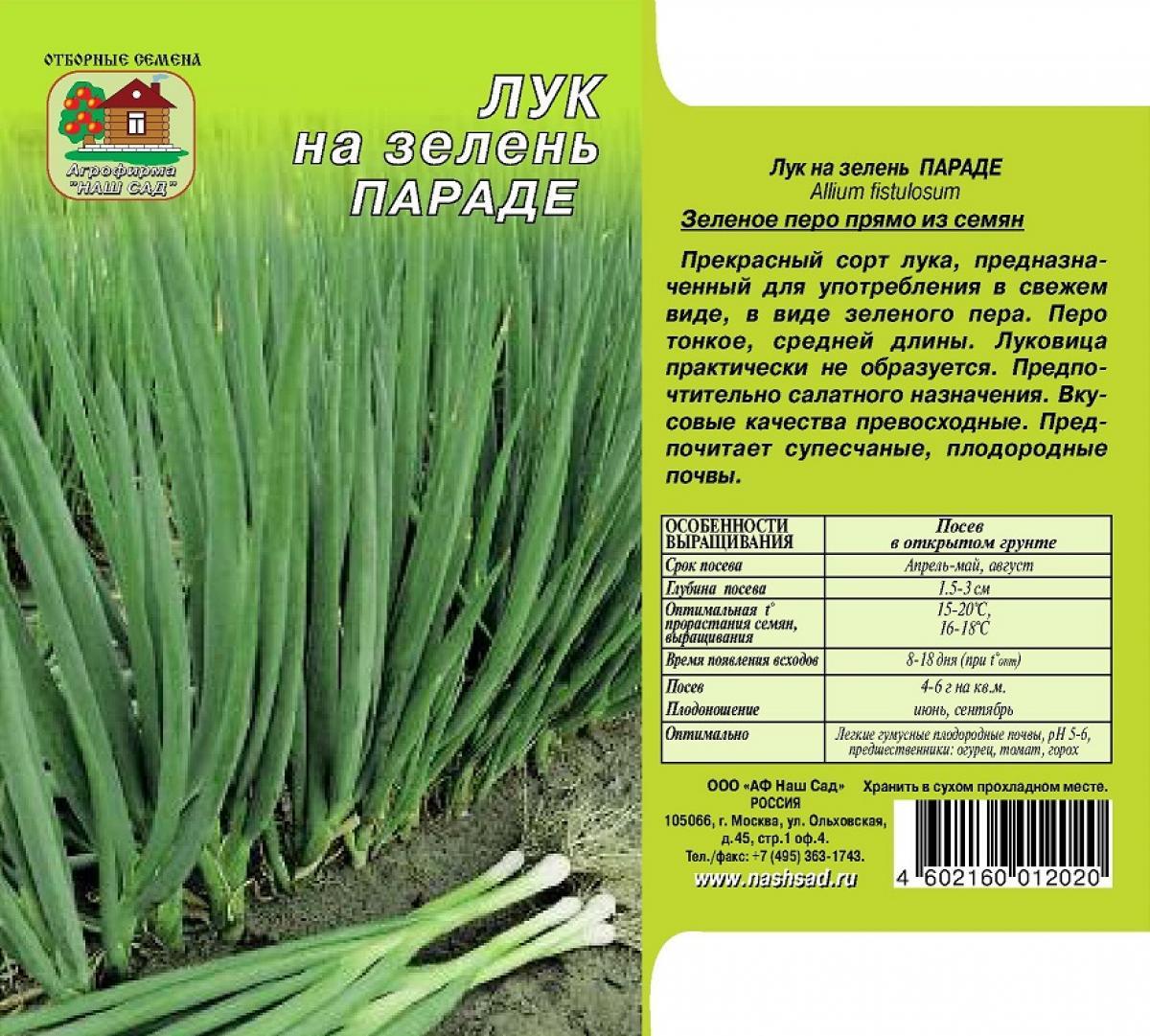 Как выбрать семена лука, чтобы получит зелень, лучшие сорта с названиями и описанием