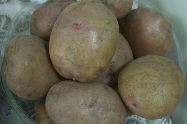 Картофель иван да марья - описание сорта с фото, посадка и уход
