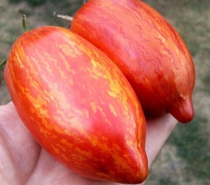 Описание томата искры пламени и агротехника культивирования сорта. характеристика и описание сорта томат искры пламени