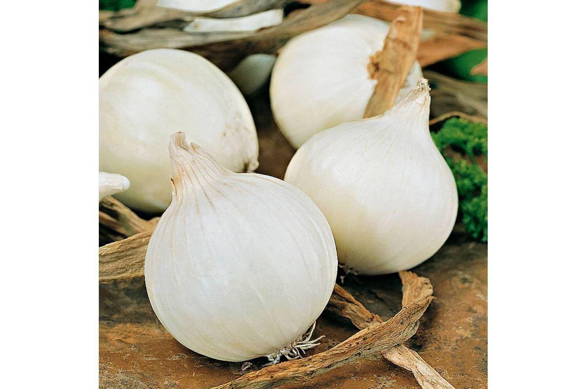 Лук сноуболл: описание сорта белого овоща, выращивание из севка, правила посадки и ухода для лучшей урожайности, нюансы хранения
