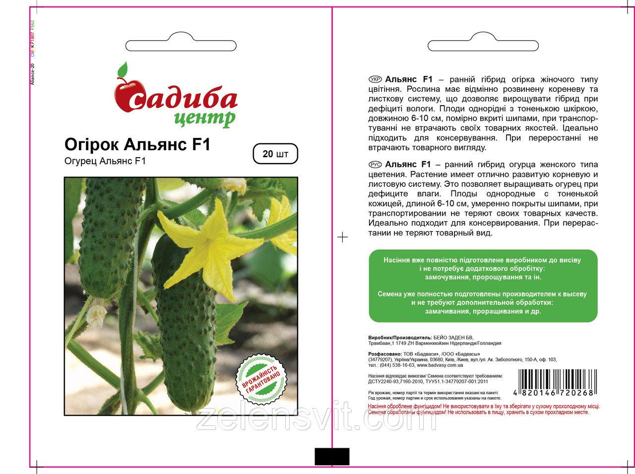 Посадка и выращивание сорта огурцов «альянс f1»