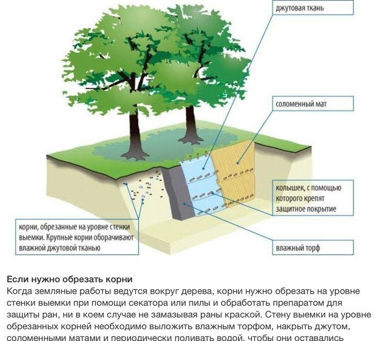 Защита древесины от грибов и насекомых. совремнные технологии