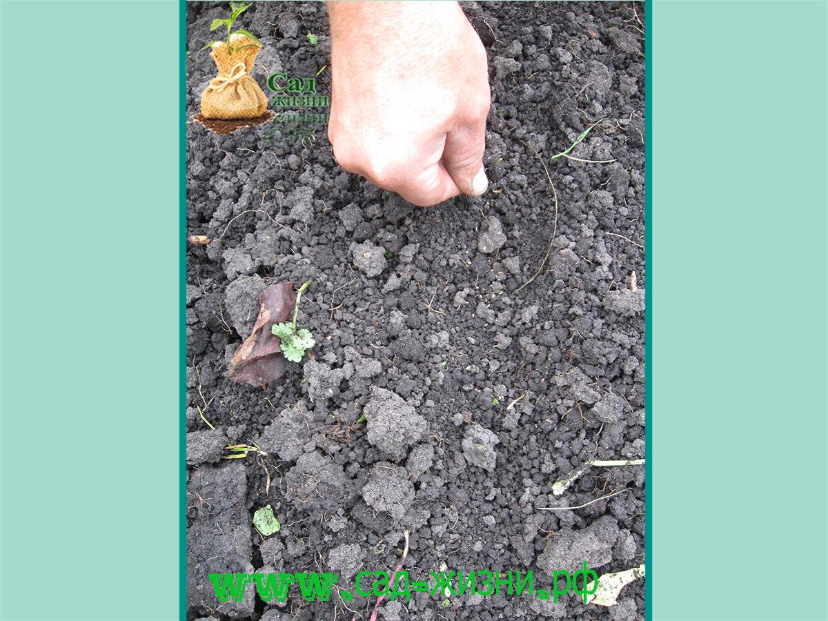 Как правильно посеять цветы под зиму? плюсы и минусы подзимнего посева. фото — ботаничка.ru