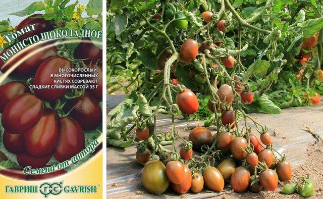 Томат монисто шоколадное: отзывы об урожайности, характеристика и описание сорта, фото помидоров