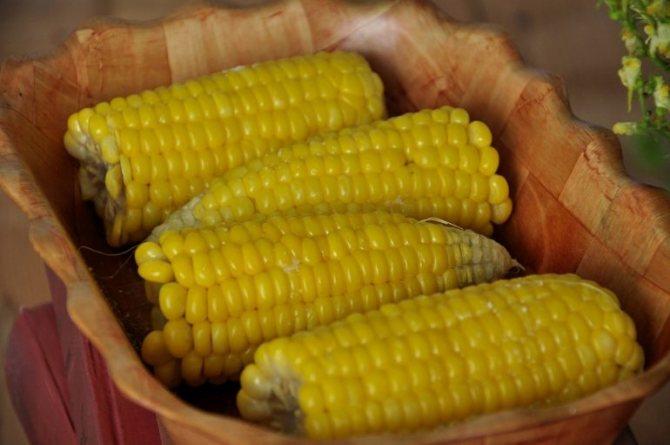 Полезные свойства и противопоказания к употреблению кукурузы