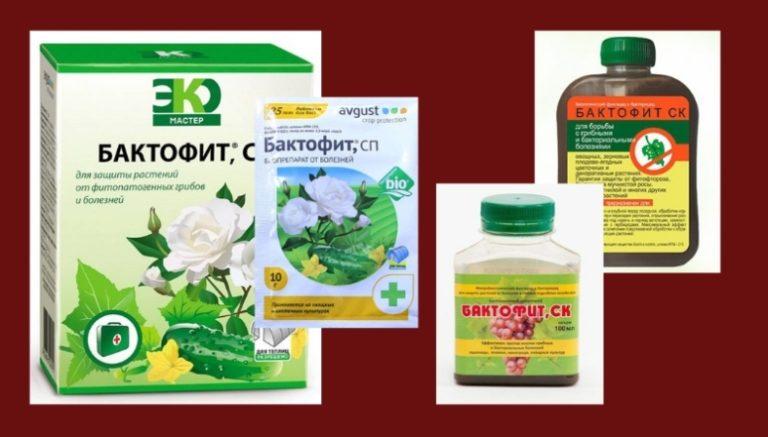 Народные средства для лечения печени | компетентно о здоровье на ilive