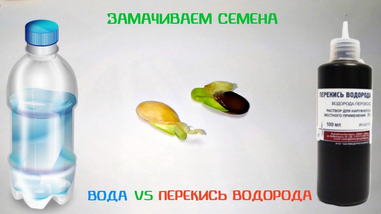 Преимущества дезинфекции семян огурца перекисью водорода