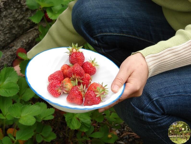 Как получить семена клубники из ягоды: 3 способа