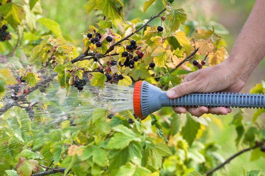 Подкормка плодовых деревьев осенью: осенний рацион для сада