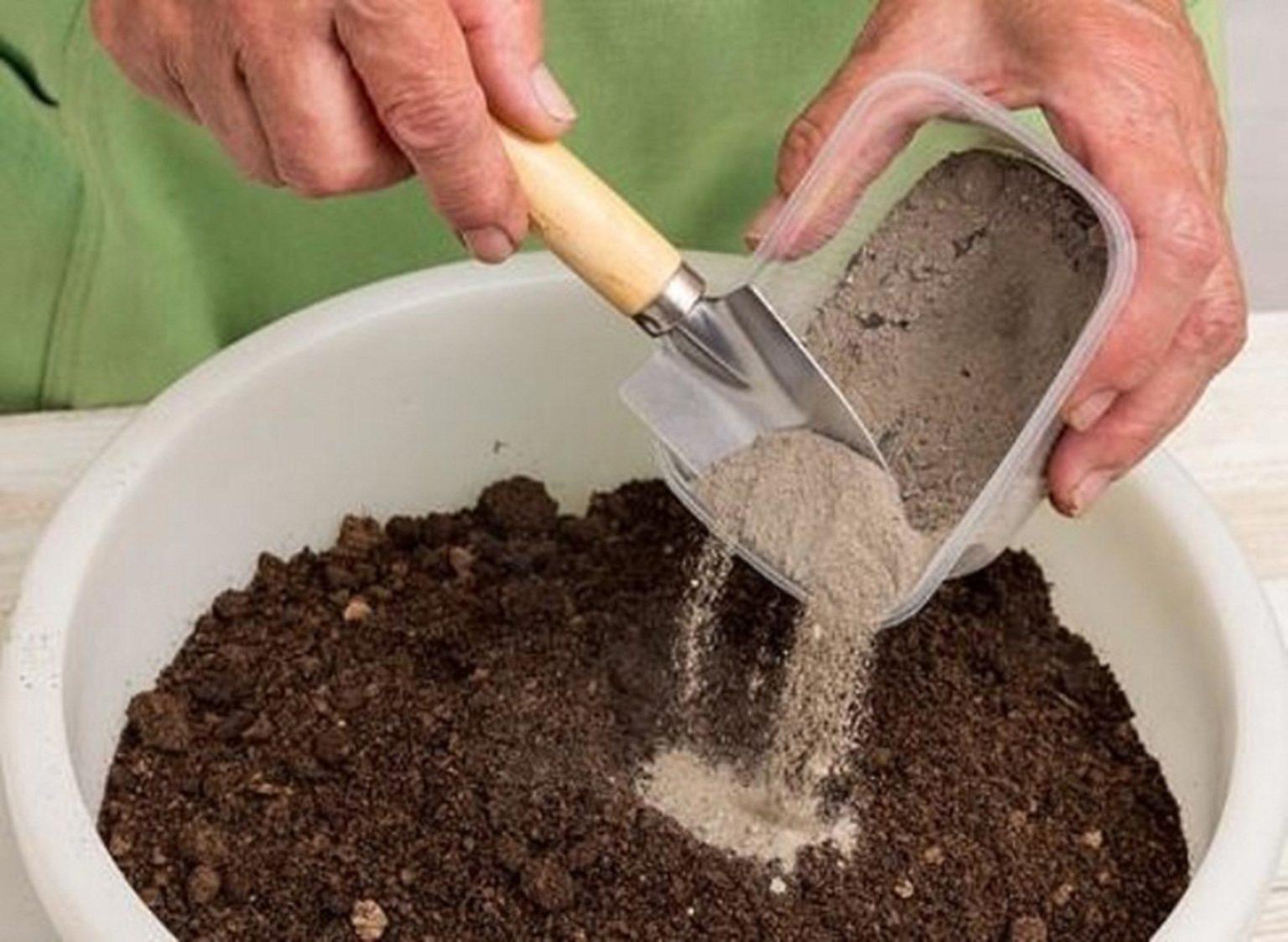 Как подкислить почву для голубики: разбираемся во всех подробностях