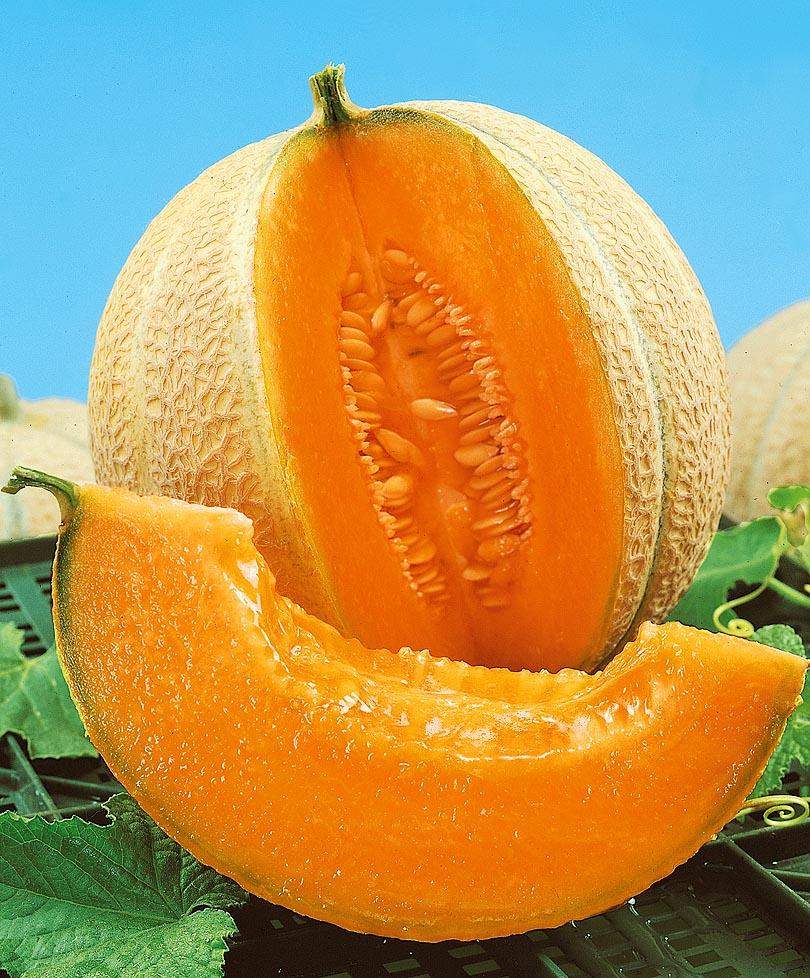 Почему дыня может быть с оранжевой мякотью внутри, что это за сорта? - всё про сады