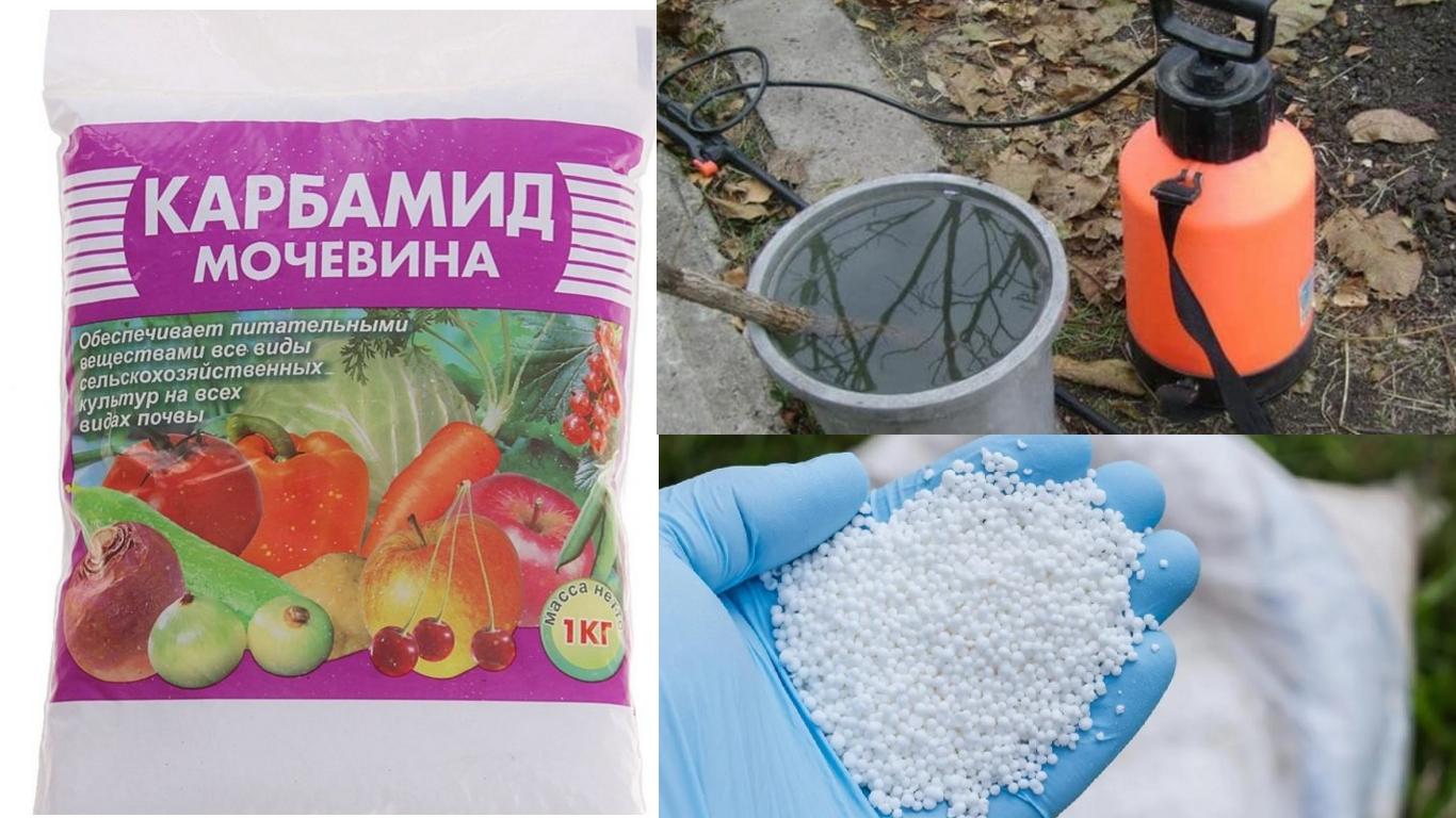 Мочевина (карбамид): применение удобрения в огороде и саду, инструкция по применению