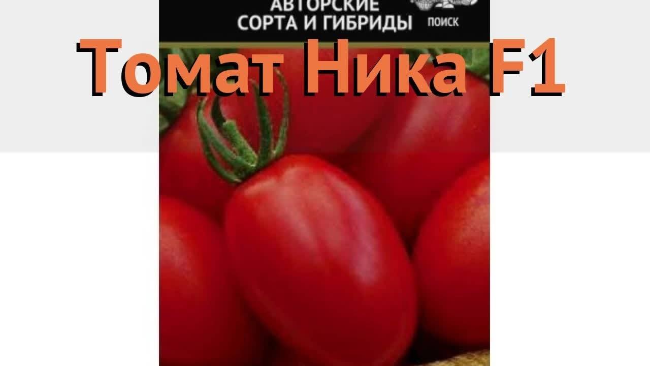 Томат биг биф f1: описание характеристик сорта помидора с фото русский фермер