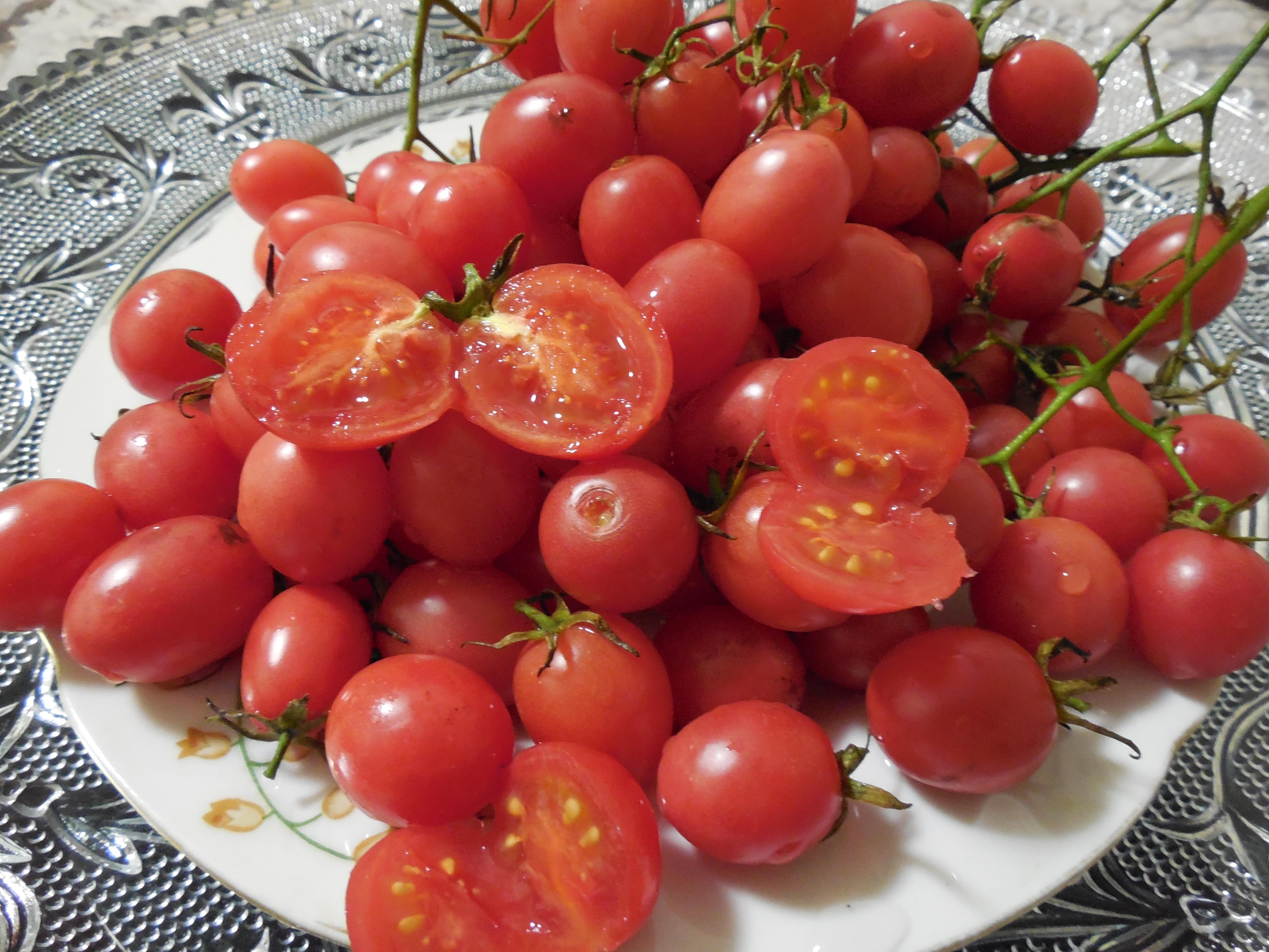 Лучшие сорта низкорослых помидоров: описания и фото