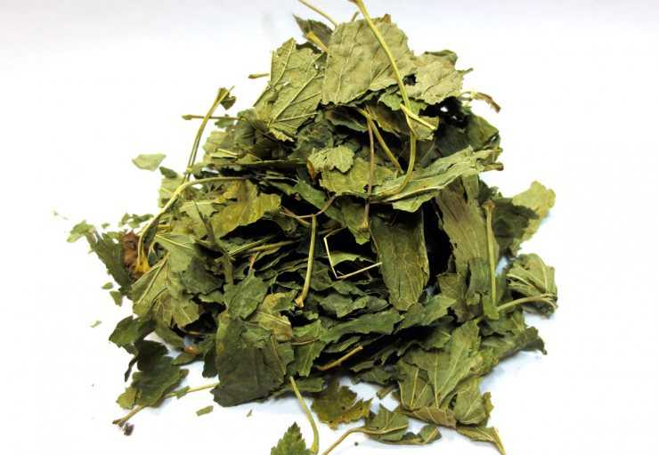 Полезные свойства листьев смородины — 60 поводов для употребления