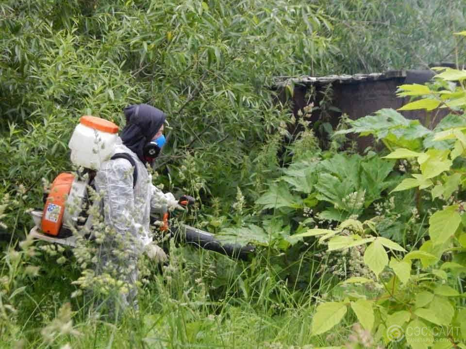 Как избавиться от пырея, описание лучших гербицидов и меры борьбы с сорняком