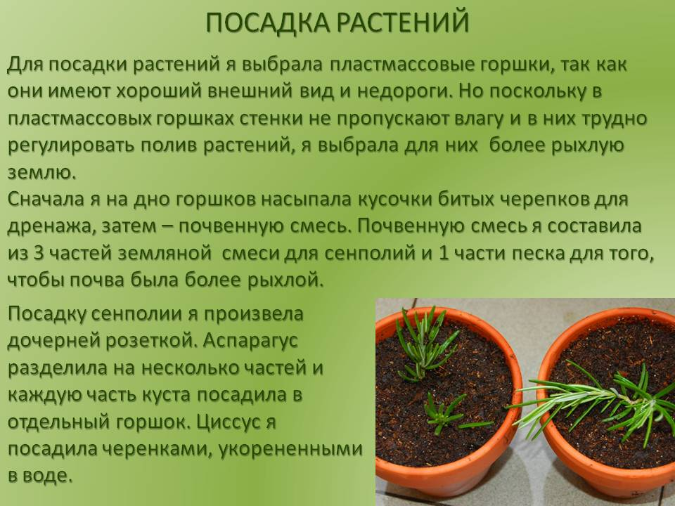 Когда и как пересаживать ирисы весной   садоводство и огородничество
