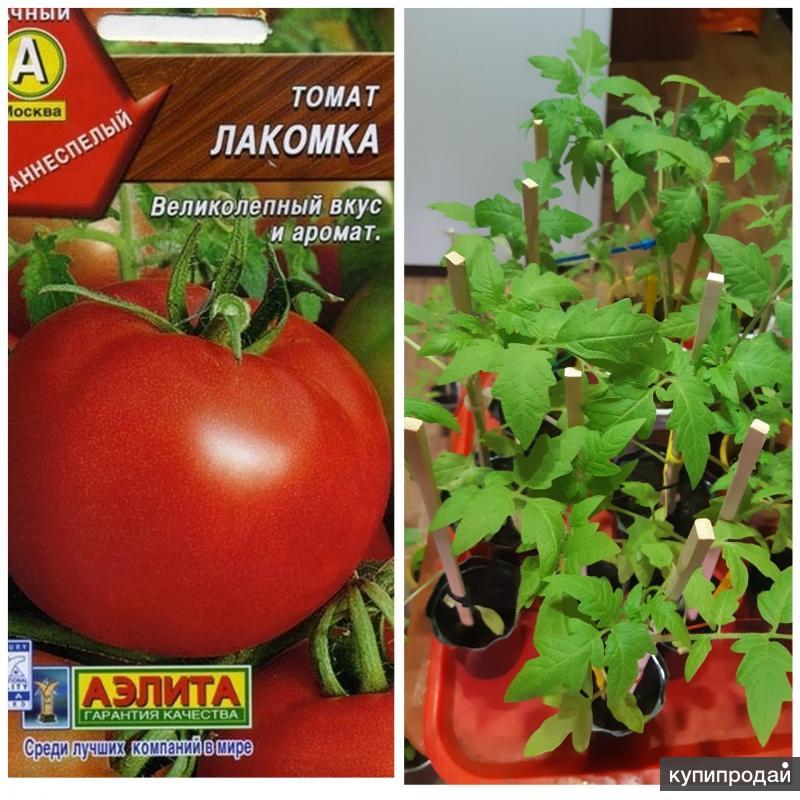 Томат лакомка — характеристика и описание сорта, фото, урожайность, достоинства и недостатки, отзывы