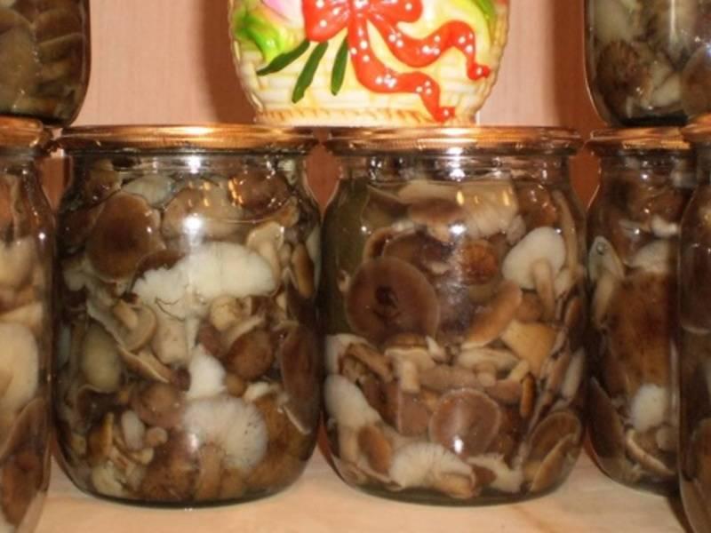 Грибы на зиму в банках. 3 простых и вкусных рецепта маринованных грибов
