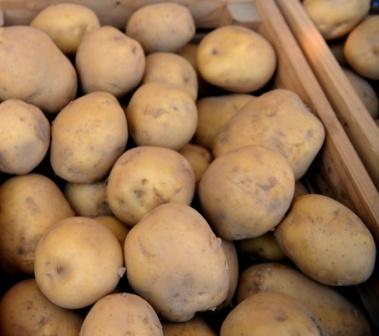 ✅ о картофеле молли: описание семенного сорта, характеристики, агротехника - tehnomir32.ru