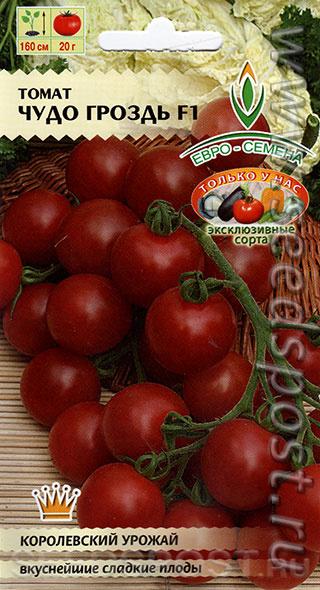 Томат черная гроздь: описание, отзывы, фото, характеристика | tomatland.ru