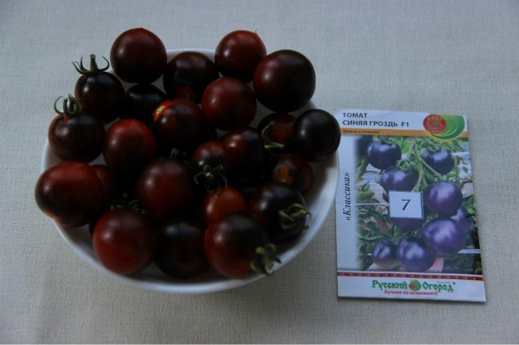 Сорта томатов: черная гроздь