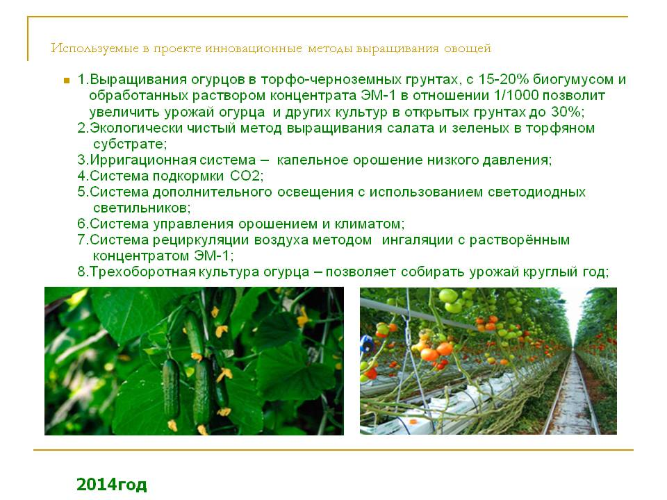 Способы выращивания рассады помидор в домашних условиях для теплицы и открытого