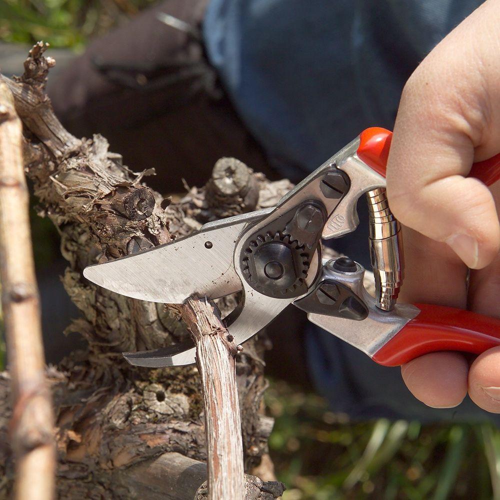 Садовые ножницы: 110 фото приспособлений для обработки травы и веток