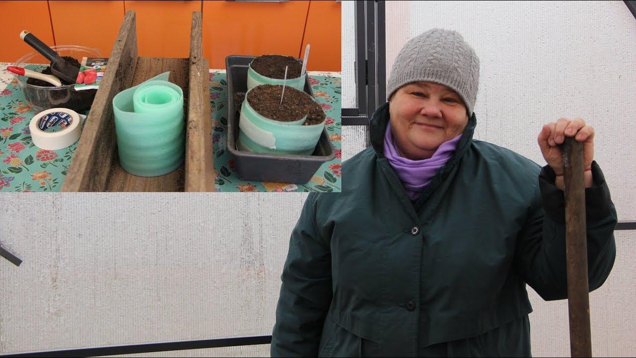 Посев в улитки: разбираем в деталях самый компактный способ выращивания рассады