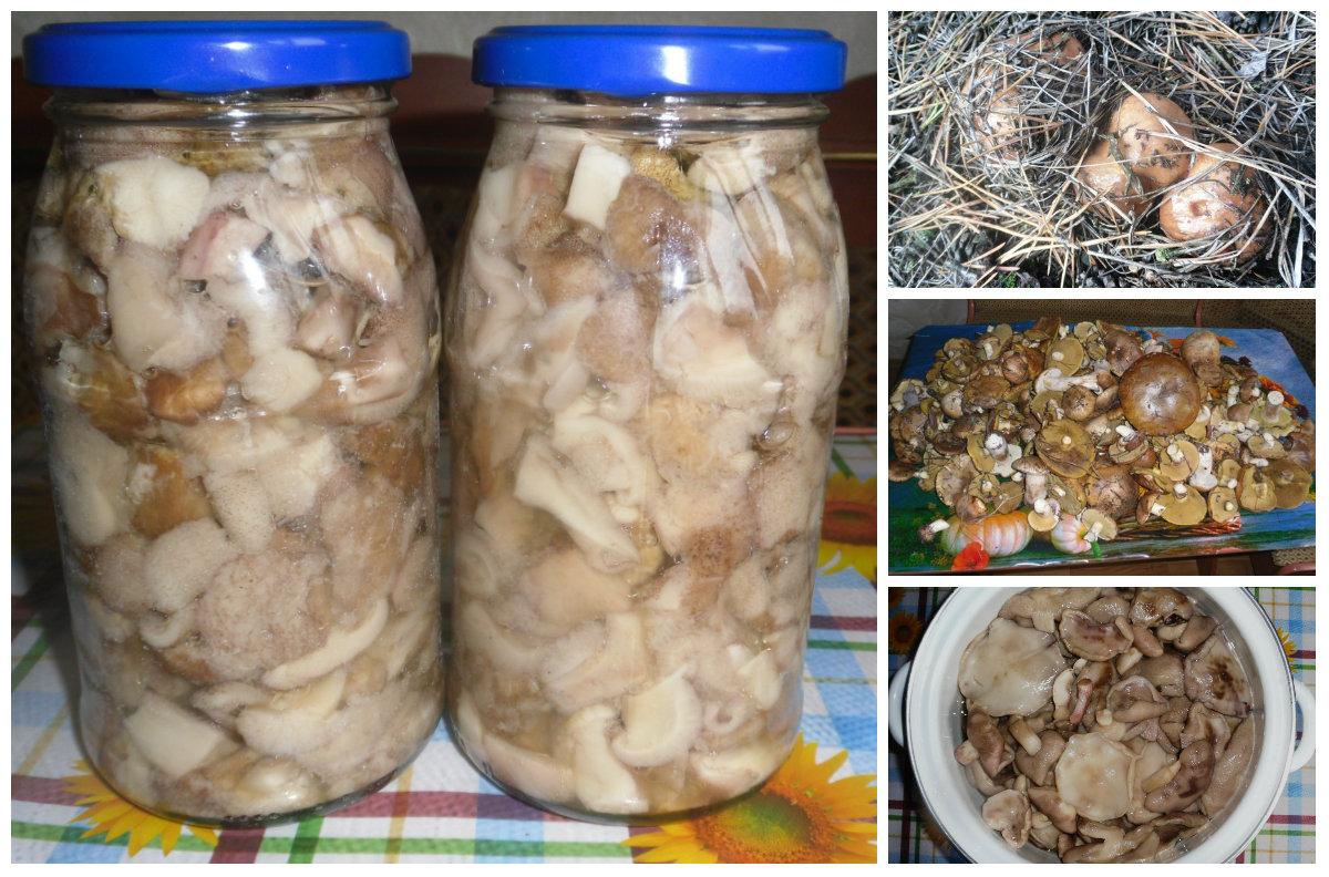 Маринованные маслята: самый вкусный рецепт без стерилизации