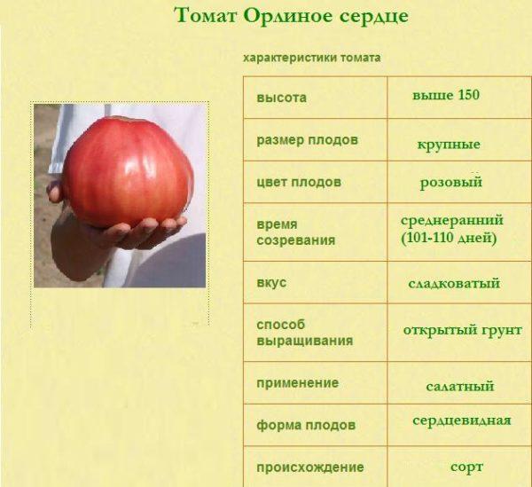 Томат орлиное сердце: отзывы, фото, урожайность, описание и характеристика   tomatland.ru
