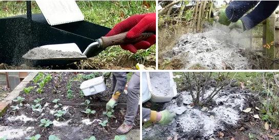 Древесная зола — натуральное удобрение для сада и огорода