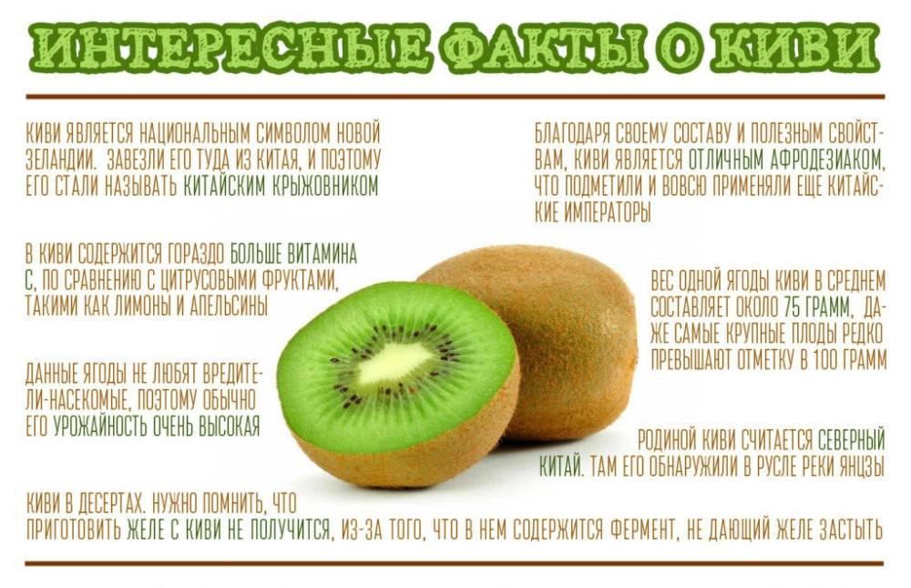 Польза киви фрукта