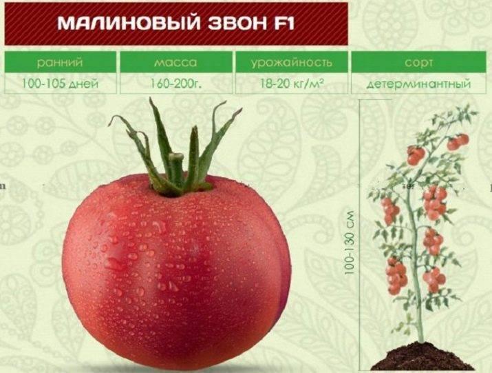 Томат малиновый звон: описание и характеристика, отзывы, фото   tomatland.ru
