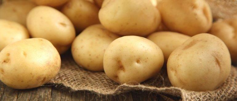 Описание и характеристика сорта картофеля Янка, правила посадки и уход