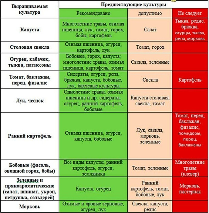 Что сажать после чеснока на следующий год: какие овощи и ягоды