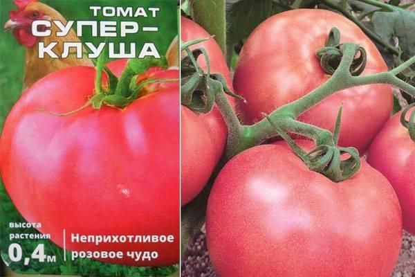 Описание сорта томат «клуша», отзывы с фото, урожайность. особенности выращивания
