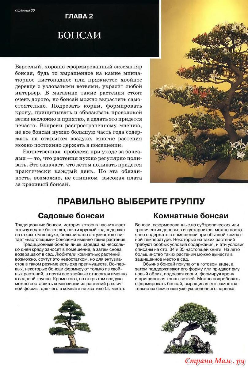 Комнатный бонсай: уход за растениями