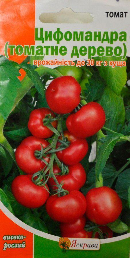 Цифомандра - фото, описание томатного дерева, выращивание