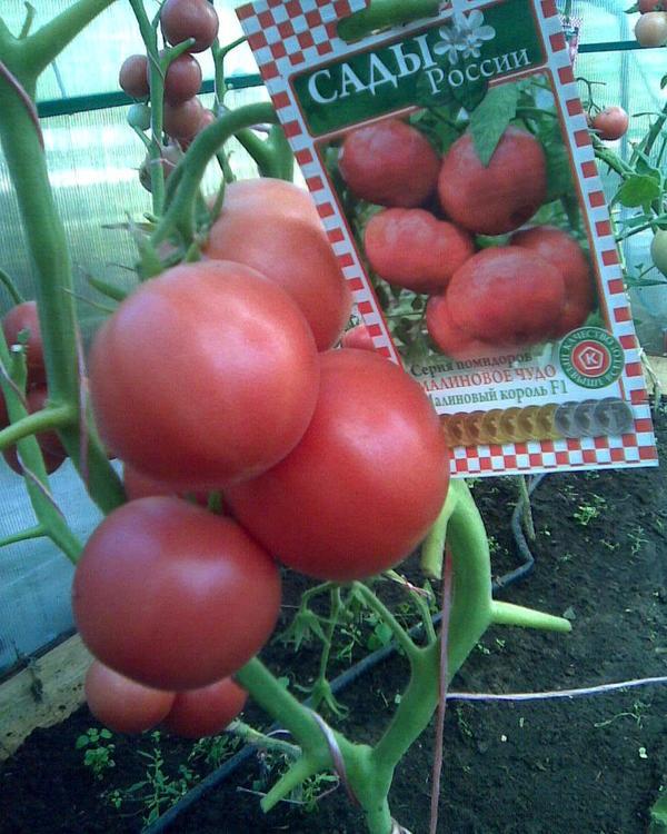 Томат малиновое чудо: характеристика и описание сорта, урожайность с фото